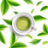 绿茶杯子小册子,横幅,离开传染媒介 库存照片
