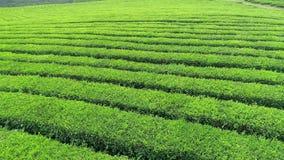 绿茶种植园空中录影是Boseong市,韩国附近找出山坡 从寄生虫的空中录影 影视素材