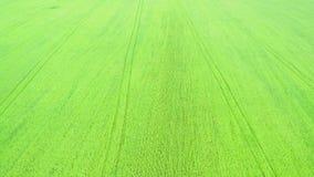 绿草从顶面鸟瞰图的橄榄球场 4K 影视素材