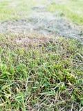 绿草作为背景 免版税库存照片