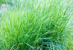 绿草关闭在一个领域春天 免版税库存照片