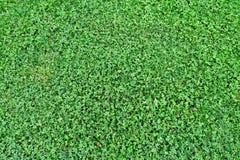 绿草关闭美妙的背景  免版税库存照片