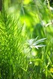 绿草和工厂 免版税图库摄影