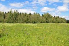 绿草和蓝天的领域在夏日 森林边缘 库存照片