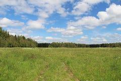 绿草和蓝天的领域在夏日 森林边缘 库存图片