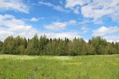 绿草和蓝天的领域在夏日 森林边缘 免版税库存照片