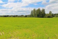 绿草和蓝天的领域在夏日 森林边缘 免版税图库摄影