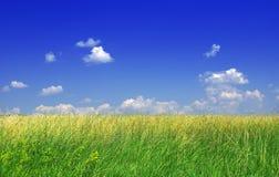 绿草和蓝天 免版税图库摄影