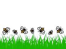 绿草和蜂了不起的设计在白色背景 库存图片