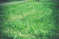 绿草在公园 库存照片