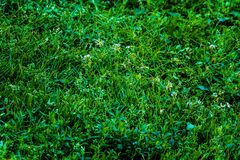 绿草在夏天各种各样末期 免版税库存照片