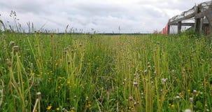 绿草在夏天自白天 影视素材