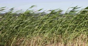 绿草在夏天自白天 股票录像