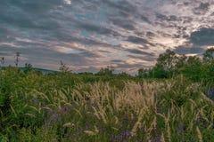 绿草在日落前的多云天空下 免版税库存图片