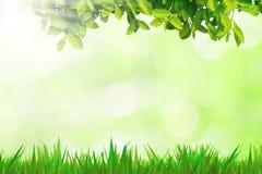 绿草在木地板bokeh离开 免版税库存图片