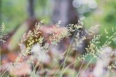 绿草在森林里 免版税库存图片