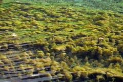 绿草在水中 图库摄影