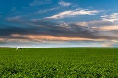 绿草在蓝天下,与两匹马,一黑和在wh 免版税库存图片