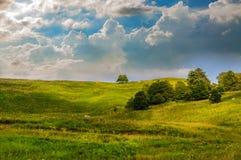 绿草小山和一棵树 免版税库存图片