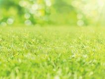 绿草弄脏了在晴朗的夏日特写镜头的背景 免版税库存照片