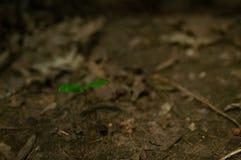 绿草新芽在地面上的 免版税库存照片