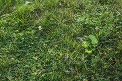 绿草无缝的纹理 免版税库存图片