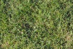 绿草无缝的纹理 图库摄影