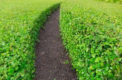绿草曲线行与土道路的在加尔省中间 库存照片