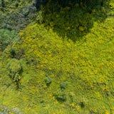 绿草有灌木的夏天草甸 免版税库存图片