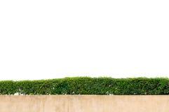 绿草框架 库存照片