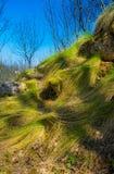 绿草流程 库存图片