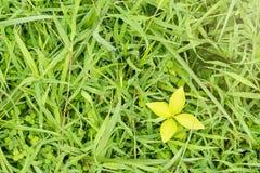 绿草的照片图片在雨样式以后的构造  库存图片