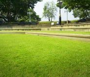 绿草纹理和树步背景照片 免版税库存照片