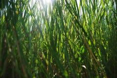 绿草背景与太阳光芒的通过它 库存照片