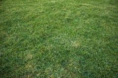 绿草背景,在白天,特写镜头照片 免版税库存照片
