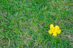 绿草背景,绿色草坪样式构造了背景 免版税库存照片