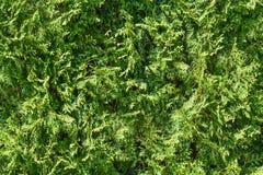 绿草背景 新绿草青苔地板庭院纹理背景 自然背景 无缝的绿草 库存照片