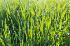 绿草背景 免版税图库摄影