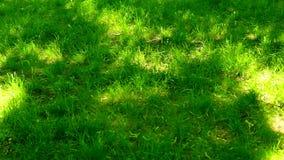 绿草草甸、天空蔚蓝和阳光在夏天,自然背景 股票录像