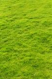 绿草草甸一个垂直的框架  免版税库存照片
