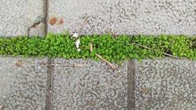 绿草通过混凝土板增长 影视素材