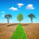 绿草道路穿过有破裂的土壤的干燥国家 库存照片