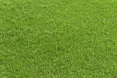 绿草领域、绿色lawb有益于纹理和背景 免版税库存照片