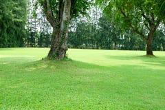 绿草领域和绿色树在公园里 免版税图库摄影