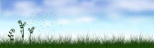 绿草风景在蓝天下 免版税图库摄影