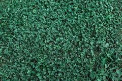 绿草,夏日草甸,美好的同类的背景 免版税库存图片