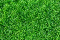 绿草 夏天背景 免版税图库摄影