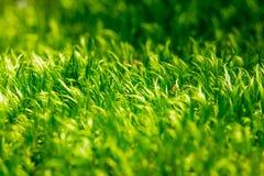 绿草 库存照片