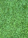 绿草 图库摄影