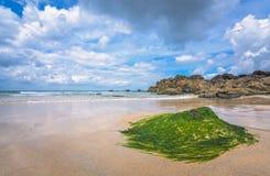 绿藻类和海草覆盖物在海滩晃动 免版税库存图片